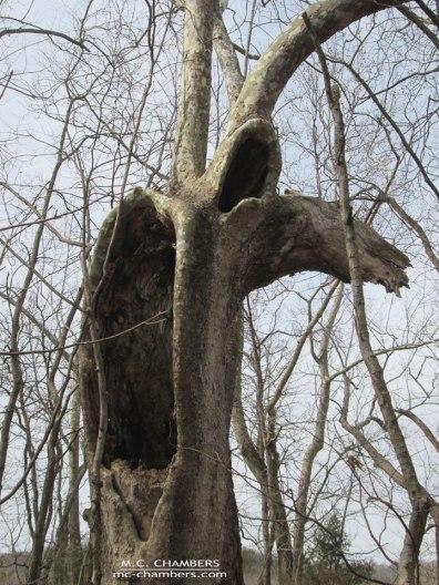 treeHaunting-lowres