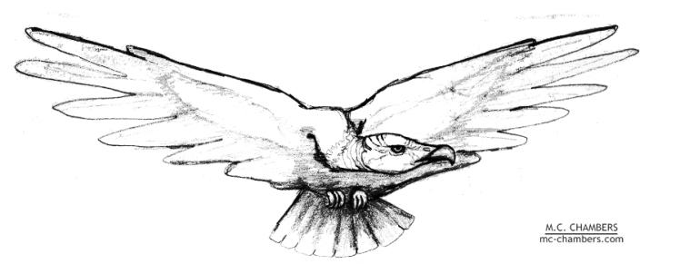 vulture-lr